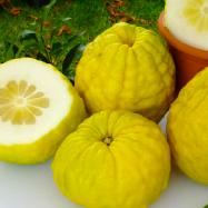 コルシカ島フルーツや原料すべてビオダイナミ農法で作られています