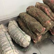コルシカ豚の放牧による養豚技術